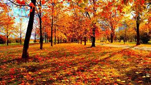 leaves autumn leaves forest fall leaf tree season seasons