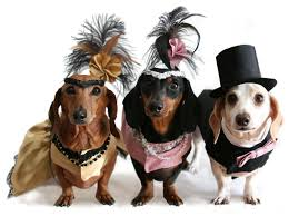 dog halloween costumes images pet costumes that will make you howl bed and biscuit austin