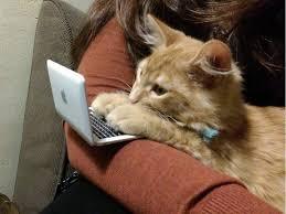 Cat Laptop Meme - kitty cat tiny computer laptop meme cute funny tabby kitten imgur