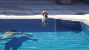 the cat at pool made the day epic funny youtube