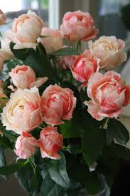197 best roses images on pinterest pretty flowers beautiful