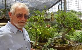 dementia australia bonsai christmas gifts to benefit queensland