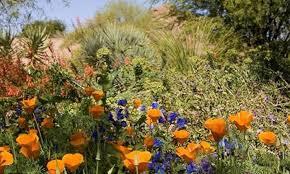 Atlanta Botanical Gardens Groupon Botanical Garden Groupon Popular Garden 2017