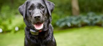 dogwatch of wichita dog fences wichita indoor pet containment
