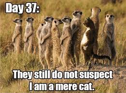 Best Animal Memes - 1 best animal memes this blog rules why go elsewhere