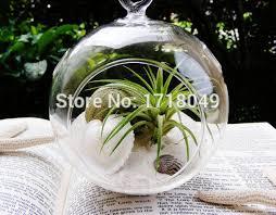 2pcs set air plant holders indoor plant desktop terrarium