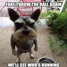 Dancing Dog Meme - funny dancing dog meme top 21 pics funny pics story