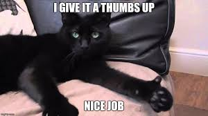 Nice Job Meme - good job meme cat social media la