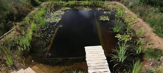 Backyard Swimming Ponds - how to build a diy natural swimming pool video treehugger