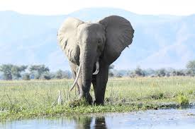The Blind Men And The Elephant Analysis Washington Monthly Why Trump U0027s Elephant Trophy Policy Is All