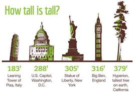 the tallest trees in the world four hitched notts
