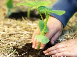 What To Plant In Your Vegetable Garden by When To Plant Pumpkins Hgtv
