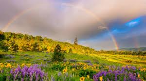 grass meadows flowers clouds springtime rainbow hills