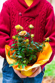 Fragrant Potted Plants Can You Replant Potted Flowers U2013 Tips On Caring For Gifted