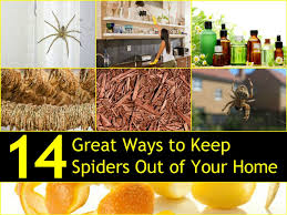 14 great ways to keep spiders out of your home naturally