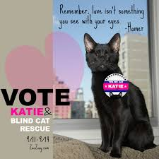 Blind Cat Sanctuary Glogirly Homer The Blind Wonder Cat