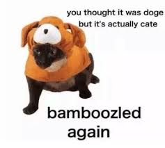 Doge Meme Font - you thought it was doge but it s actually cate bamboozled again
