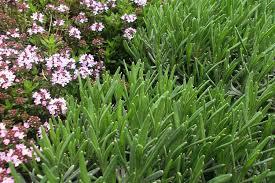 Pflanzen Fur Japanischen Garten Pflanzen Für Die Beeteinfassung Dein Eden