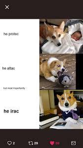 Corgi Lawyer Meme - writing humor with lawyer dog lawyer jokes pinterest writing