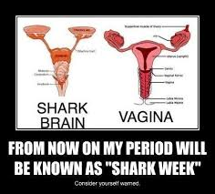 women盍s shark week sharks know your meme