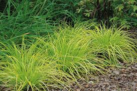 top ornamental grasses for designers garden design journal