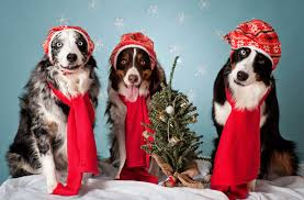 owners to buy christmas presents for their pets nature news