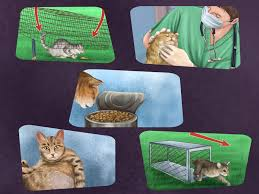 how to tame a stray cat with pictures wikihow