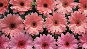 types of flowers pictures and names and meanings baby names
