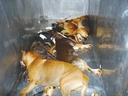 pet euthanasia opinions on animal euthanasia