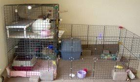 Diy Indoor Rabbit Hutch Indoor Cat Cages Enclosures Foter