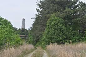 atlanta seeks to protect tree canopy with rewrite of ordinance
