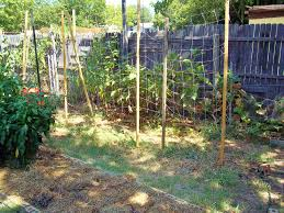 update denton u0027s backyard farms page 2
