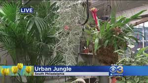 Urban Gardening Philadelphia - south philly garden center offering garden advice cbs philly