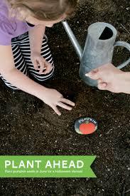 garden design garden design with planting pumpkins with children
