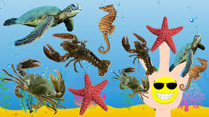 learn sea animal names learning water animals names and sounds