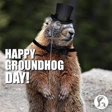 289 holiday groundhog images ground hog