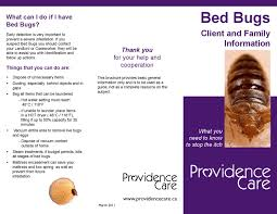 Can Bed Bugs Kill You Bed Bugs Brochure Providence Care By Providence Care Issuu