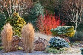 bressingham gardens winter szukaj w google flowering winter
