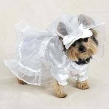 dog wedding dress wedding costumes for dogs ebay