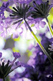 513 best flowers are beautiful images on pinterest flowers