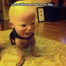 Scary Baby Halloween Costumes Scary Dog