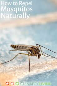 how to repel mosquitoes naturally snappy living