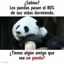 dopl3r com memes sabías l los pandas pasan el 80 de sus