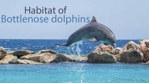 what kind of habitat does a bottlenose dolphin live in youtube