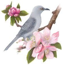 Flower And Bird - southern california garden guide basic gardening u s state