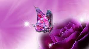 beautiful 3d fancy rose flower butterfly pink hd quality desktop