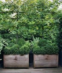 representation of tips of selecting tree planter box garden and