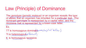 study guide mendels laws of heredity principles of mendelian genetics b 4 6 principles of mendelian