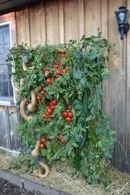 amazon com space saving vertical organic vegetable sky