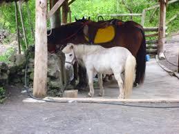 sims 3 australian shepherd korea doug j u0027s blog